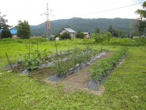 メンテナンス後の自家菜園