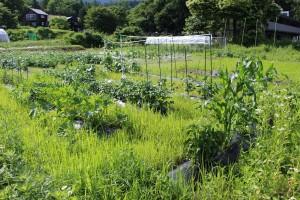 伸び放題の雑草
