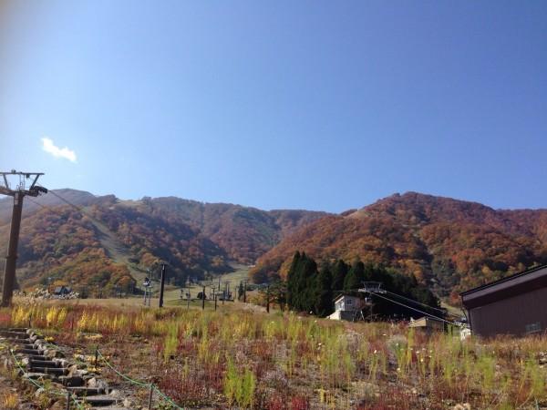 秋が深まってきました!