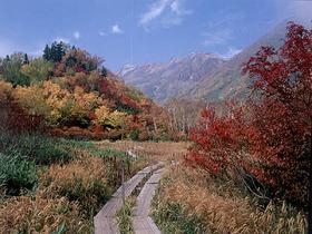秋の「栂池自然園」