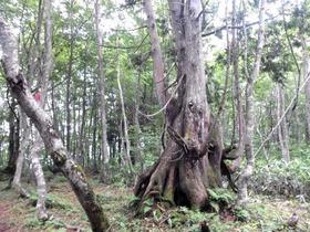 ねずこの森
