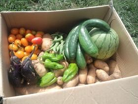 収穫祭♪豊作です!