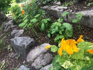 庭先にはハーブも植えます!!