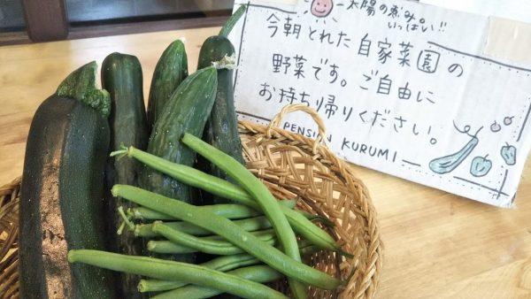 新鮮な自家菜園野菜 無料でどうぞ!!