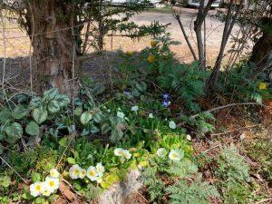 ペンションの庭の花々たち