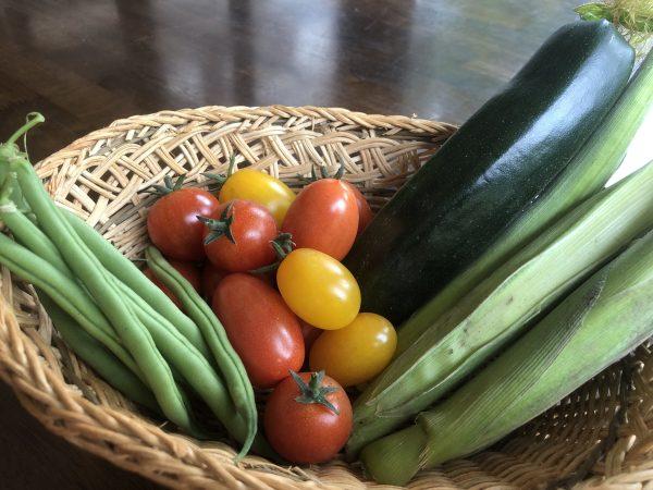 新鮮な旬の夏野菜を収穫!