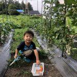 自家菜園野菜収穫体験付き1泊2食プラン